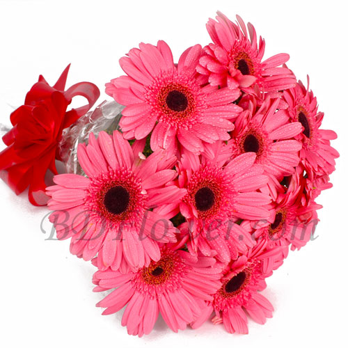 Send 10 pcs pink gerbera in bouquet to Bangladesh
