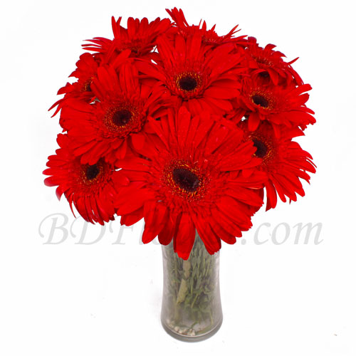 Send 10 pcs red gerbera in vase to Bangladesh