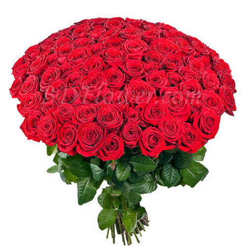 Send 100 red roses in bouquet to Bangladesh
